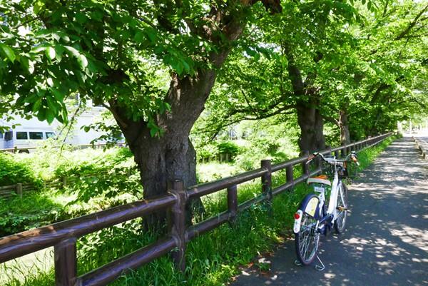 【永代供養墓普及会】川越の歴史散策するならサイクリングで!