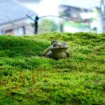 雨の日こそ美しい!非日常が味わえる愛媛西予の絶景「こけむしろ」