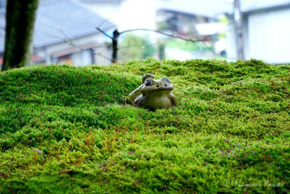 【LINEトラベルjp】雨の日こそ美しい!非日常が味わえる愛媛西予の絶景「こけむしろ」