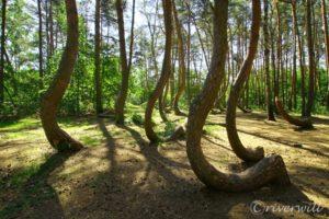 【LINEトラベルjp】何これ衝撃ミステリー!ポーランドの歪んだ森「クシュヴィ・ラス」