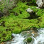 【旧記事】天然ビロード緑のじゅうたん! 奥草津「チャツボミゴケ公園」の苔モフワールドがハンパない