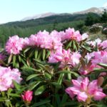 【ググっとぐんま】初夏の高原をゆく~愛妻の地・嬬恋村で天空の花畑を楽しもう
