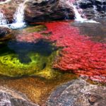 【コロンビア】天然のパレット!世界一美しき五色の川「キャノ・クリスタレス」