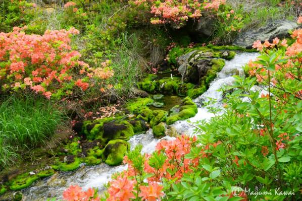 【LINEトラベルjp】天然ビロード緑のじゅうたん!奥草津「チャツボミゴケ公園」の苔モフワールドがハンパない