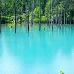 【たびこふれ】<北海道>世界的に有名!? 神秘的な景色が広がる「白金青い池」の魅力を徹底レポート