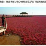 【Compathy】赤の絶景!見渡す限り赤い絨毯が広がる「紅海灘風景区」